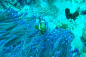 anemone 2