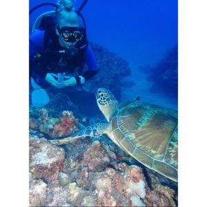 turtle saipan